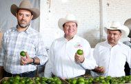 Se compromete Gobernador Tello a fortalecer a los productores de limón