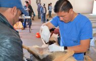 Exitosa Campaña Gratuita de Esterilización para Perros y Gatos en Villanueva