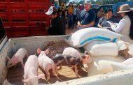 Entrega SECAMPO paquetes porcinos y caprinos del programa Apoyo a la Mujer Rural