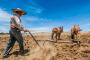 Se entregan incentivos de Producción para  el Bienestar a 46 mil 432 campesinos zacatecanos