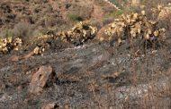 Interpondrá Gobierno de Zacatecas denuncia ante fiscalía de justica por incendio provocado en eco parque