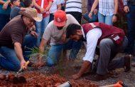 Continúa campaña de reforestación por parte del Ayuntamiento de Guadalupe