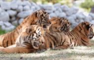 Cuenta parque y zoológico la encantada con nuevos ejemplares