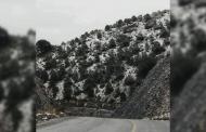 Se registran primeras nevadas en Mazapil