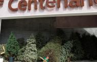 Organiza SAMA acopio de pinos navideños naturales