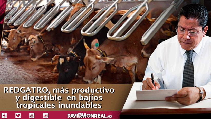 Investigadores mexicanos desarrollan nueva variedad de pasto para ganado