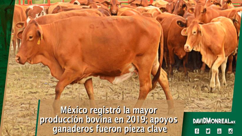 México registró la mayor producción bovina en 2019; apoyos ganaderos fueron pieza clave