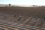 Implementan estrategias de prevención de contagio del Covid-19 entre jornaleros agrícolas.
