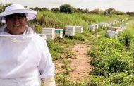 Destaca Zacatecas en apicultura; produce 2 mil toneladas de miel al año.