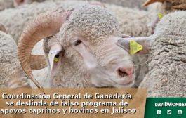 Coordinación General de Ganadería se deslinda de falso programa de apoyos caprinos y bovinos en Jalisco.