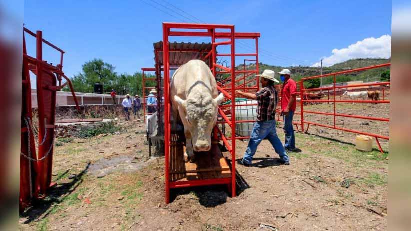Con obras por 4.9 mdp, Gobierno de Tello apoya a ganaderos de Jalpa