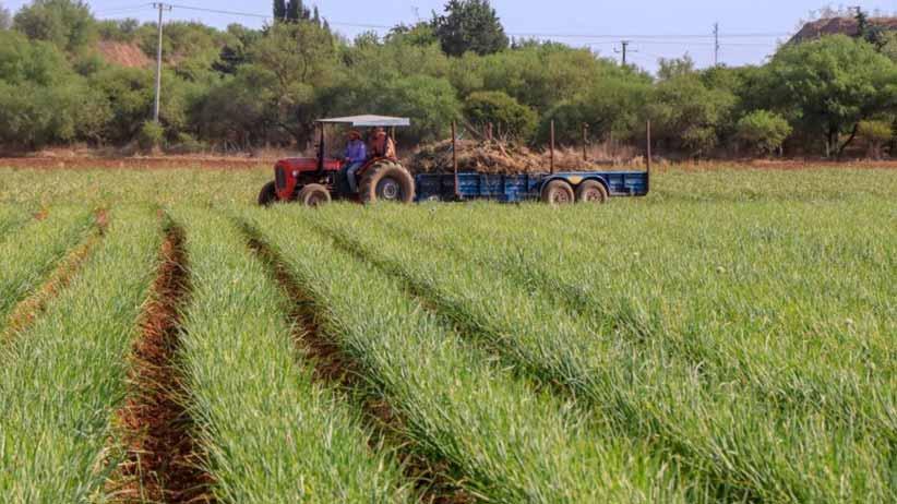 Amplían recepción de solicitudes para programas emergentes de fertilizante y avena