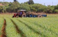 Con lluvia de junio, condiciones para sembrar 80% de la tierra de temporal en el estado.