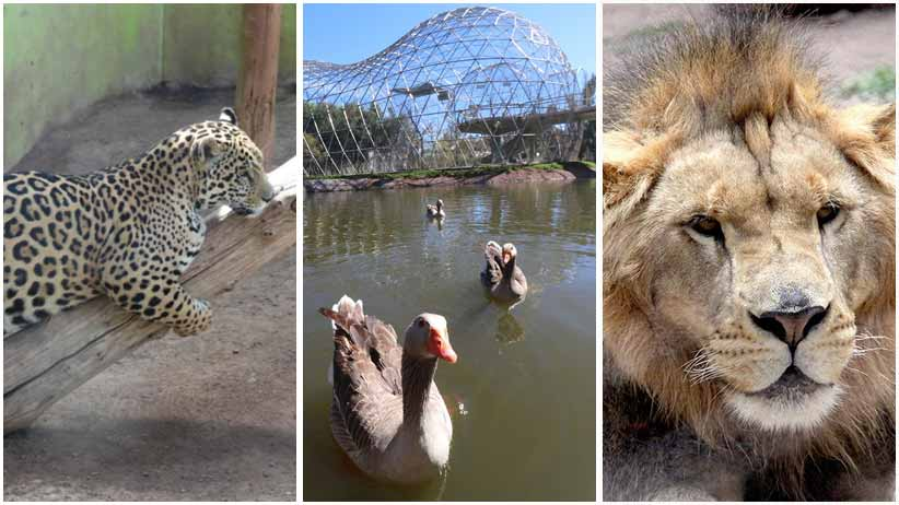 Mantiene SEDIF cuidado de animales en el Parque y Zoológico La Encantada