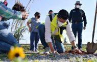 Supervisa Julio César Chávez jornada de limpieza y reforestación en Mina Azul