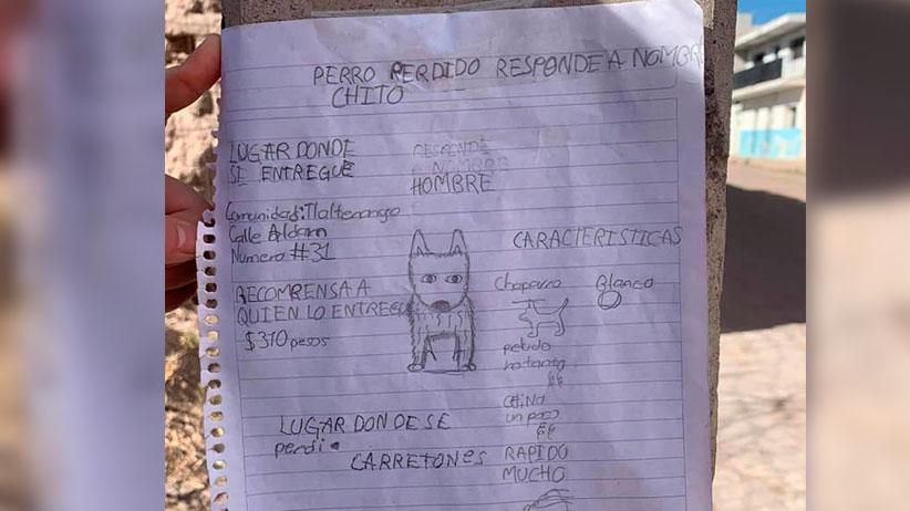 Niño de Tlaltenango busca a su perrito