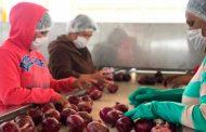 Cumplió Gobernador Alejandro Tello con el financiamiento para la agricultura de negocios